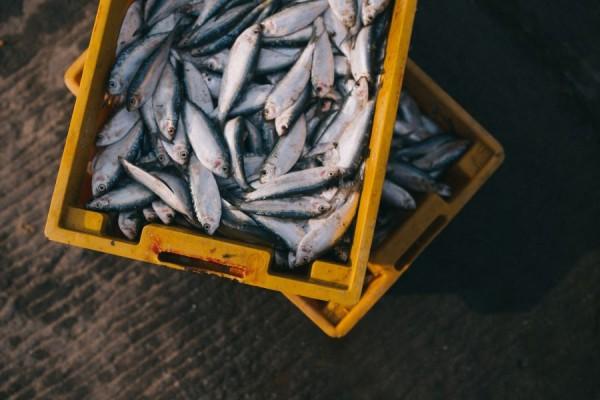 Poziv na radionicu za prvokupce proizvoda ribarstva